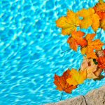 Best Pool Cleaner For Leaves Review Guide Of 2020