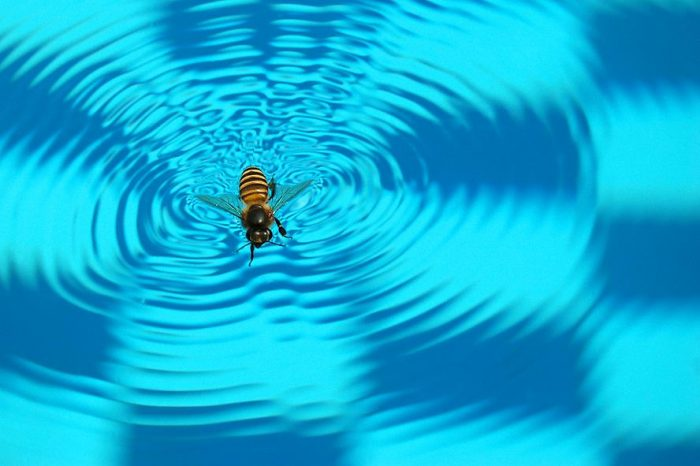 How To Keep Bees Away From Pool Review Guide For 2020-2021