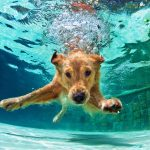Can Dogs Go In A Pool? Review Guide For 2020-2021