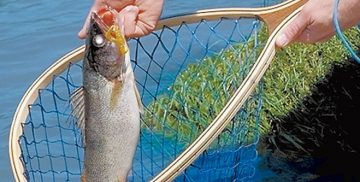 Top Best Fishing Nets Review Guide For 2021-2022